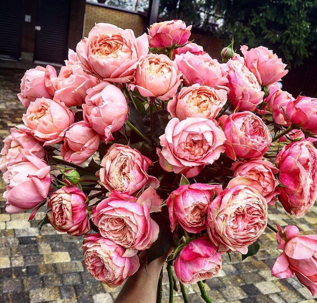 Розовая симфония – как выбрать королевские цветы