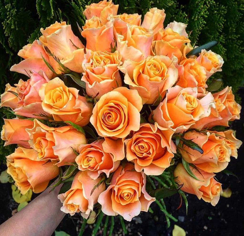 Какие цветы купить на 14 февраля?